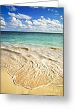Tropical Beach  Greeting Card by Elena Elisseeva