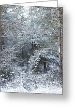 Winter Greeting Card by Svetlana Sewell
