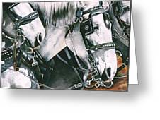 4 Grays Greeting Card by Nadi Spencer