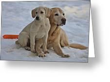 Yellow Labradors Greeting Card by Steven Lapkin