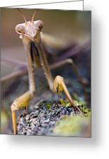 Mantis Greeting Card by Andre Goncalves