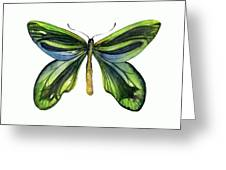6 Queen Alexandra Butterfly Greeting Card by Amy Kirkpatrick