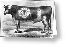 Cattle, 19th Century Greeting Card by Granger