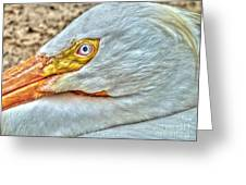 A Bird's Eye View Greeting Card by Michael Garyet