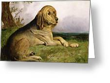 A Bloodhound In A Landscape Greeting Card by English school