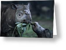 A Captive Sumatran Rhinoceros Greeting Card by Joel Sartore