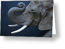 A Female African Elephant, Loxodonta Greeting Card by Joel Sartore