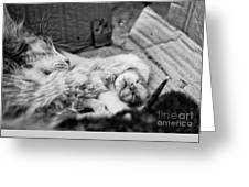A Mother's Paw Greeting Card by Dean Harte