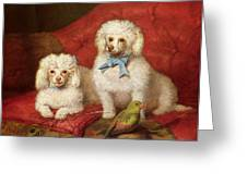 A Pair Of Poodles Greeting Card by English School