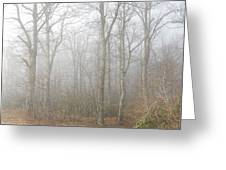 A Perfectly Beautiful Foggy Morning Greeting Card by Diannah Lynch