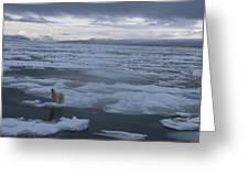 A Polar Bear On A Disintergrating Ice Greeting Card by Paul Nicklen