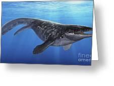 A Prognathodon Saturator Swimming Greeting Card by Sergey Krasovskiy