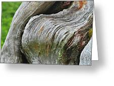 A Remarkable Tree - Duncan Western Red Cedar Olympic National Park WA Greeting Card by Christine Till