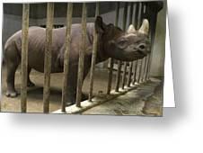 A Rhino At The Sedgwick County Zoo Greeting Card by Joel Sartore