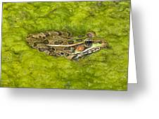 A Rio Grande Leopard Frog Sitting On A Greeting Card by Jack Goldfarb