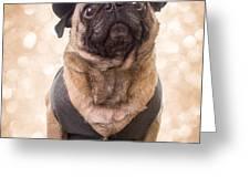 A Star Is Born - Dog Groom Greeting Card by Edward Fielding