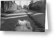 A Terriers Perspective Greeting Card by Reb Frost
