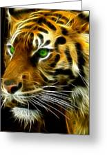 A Tiger's Stare Greeting Card by Ricky Barnard