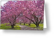 A Walk Down Cherry Blossom Lane Greeting Card by Cindy Lee Longhini