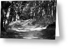 A walk in the woods Greeting Card by Edward Myers