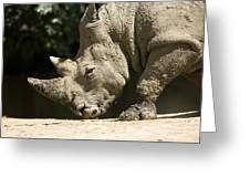 A White Rhino Sniffs The Dust Greeting Card by Joel Sartore