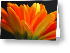 Abstract Gerbera Petals Greeting Card by Juergen Roth