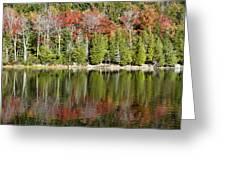 Acadia Tree Reflections Greeting Card by Alexander Mendoza