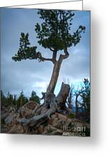 Against The Odds Greeting Card by Idaho Scenic Images Linda Lantzy