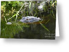 Alligator Hunting Greeting Card by David Lee Thompson