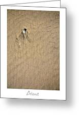 Alone Greeting Card by Peter Tellone