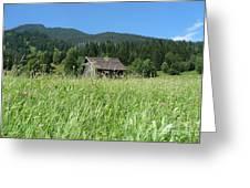 Alpine Meadow  Greeting Card by Carol Groenen