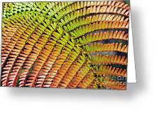 Amaumau Fern Frond Greeting Card by Greg Vaughn - Printscapes