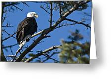 American Bald Eagle Greeting Card by Chad Davis