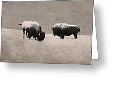 American Bison Greeting Card by Ron Jones