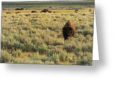 American Bison Greeting Card by Sebastian Musial