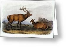 American Elk, 1846 Greeting Card by Granger