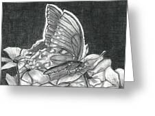American Lady Butterfly And Impatiens Greeting Card by Joy Neasley