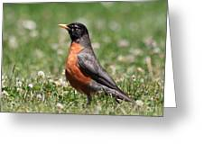 American Robin Greeting Card by Wingsdomain Art and Photography
