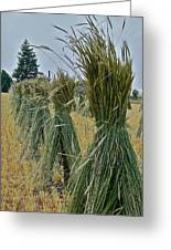 Amish Harvest Greeting Card by Diana Hatcher