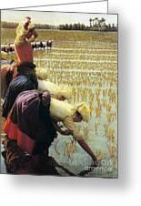 An Italian Rice Field Greeting Card by Angelo Morbelli