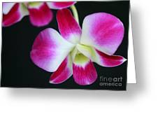 An Orchid Greeting Card by Sabrina L Ryan