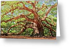 Angel Oak - Charleston SC  Greeting Card by Drew Castelhano