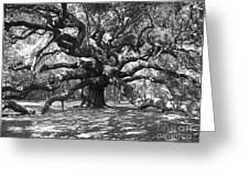 Angel Oak Tree Black And White Greeting Card by Melanie Snipes