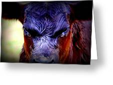 Angry Black Angus Calf Greeting Card by Tam Graff