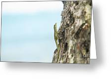 Anole Lizard Greeting Card by Brandon Tabiolo - Printscapes