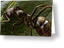 Ant On A Leaf Greeting Card by Ryan Kelly