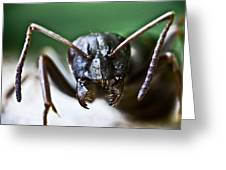 Ant Smile Greeting Card by Ryan Kelly