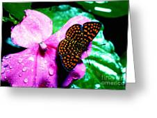 Antillean Crescent Butterfly On Impatiens Greeting Card by Thomas R Fletcher