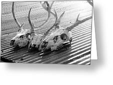 Antlers On Tin Roof Greeting Card by Thomas R Fletcher