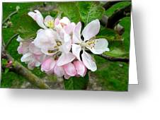 Apple Blossom Greeting Card by Joyce Woodhouse